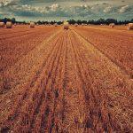 camp blat